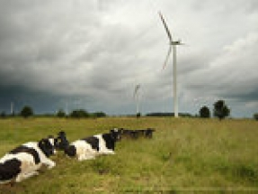 Vestas surpasses 1 GW of order intake from auctions in Poland