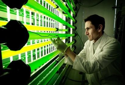 Microalgas: mejoras de un 80% en la captación de luz y de un 14% en la producción