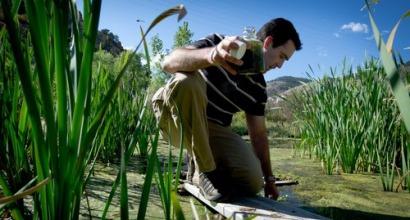 WWF y UICN participan en los esquemas de certificación de biocarburantes aprobados por la CE