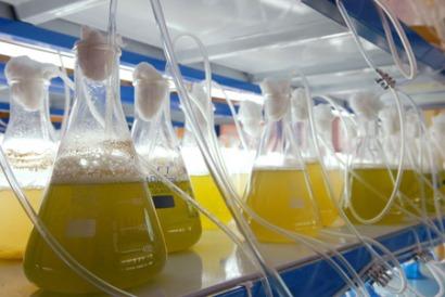 Embraer y Boeing: a la búsqueda de biocombustibles para la aviación