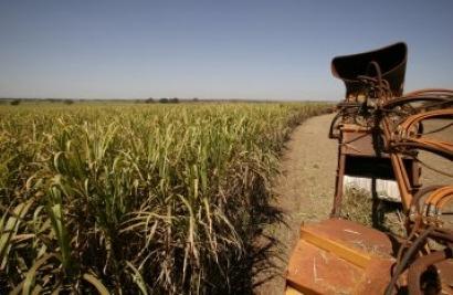 Unilever y Nestlé se unen a ONG contra los biocarburantes de cultivos