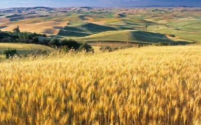 Estudio: Biocarburantes de residuos de maíz emiten más CO2 de lo previsto