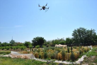Drones que ayudan a escoger el cereal más apto para etanol y reducir el uso de herbicidas