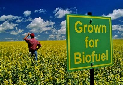 """La CE hace oficial el """"recorte"""" a los biocarburantes para limitar la reconversión mundial de tierras"""
