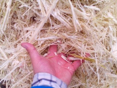 Cada vez más bagazo de caña de azúcar en el etanol europeo