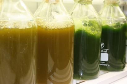 Biodiésel y biogás a partir de microalgas más eficientes