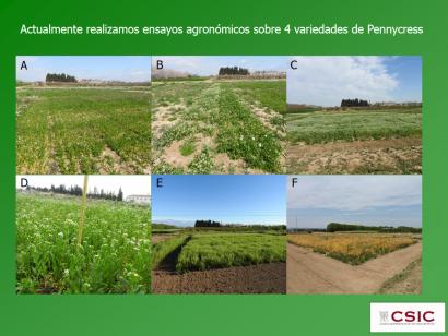 """Dos proyectos españoles trabajan con un biocarburante que """"mejoraría la calidad de cualquiera de los disponibles en el mercado"""""""