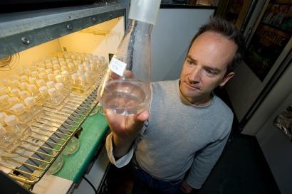 La producción de biocarburantes con algas sigue sin ser rentable