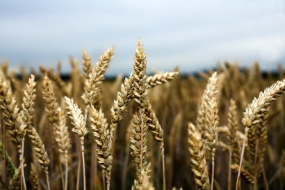 La UE estudia elevar al 50% la reducción de emisiones de los biocarburantes en 2013
