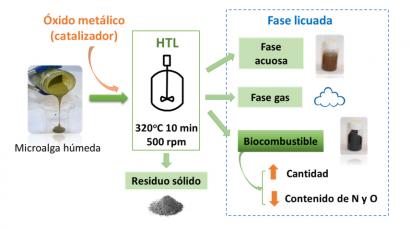 Nuevo biocarburante con algas en el laboratorio, pero ni un litro a la venta