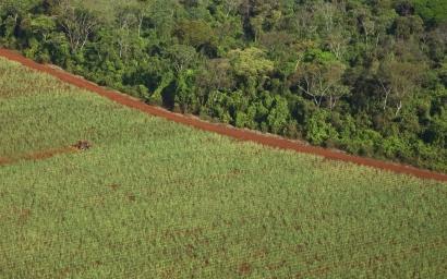 Fuerte contestación a Bolsonaro ante su ambición por producir más etanol a costa de la Amazonia