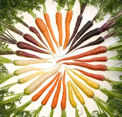 ARGENTINA: La zanahoria, buena para la vista... ¡y para producir biocombustible!