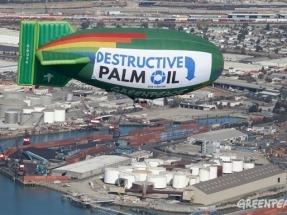 Cerco europeo al aceite de palma mientras la industria del biodiésel evita hablar de él