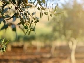 Cómo saber el potencial de biorrefinación de subproductos del olivar y la horticultura