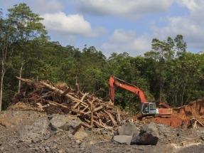 El Parlamento Europeo pide restringir el uso de aceite de palma en biocarburantes