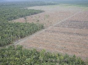 La Comisión de Agricultura del Parlamento Europeo quiere frenar el aceite de palma
