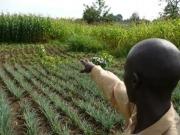 La sostenibilidad de los biocombustibles debe contar más con los pequeños agricultores