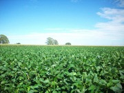 El sector del biocombustible apoya un reclamo ante la OMC