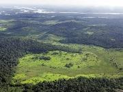 Convenio de Biodiversidad: no pero sí a los biocarburantes