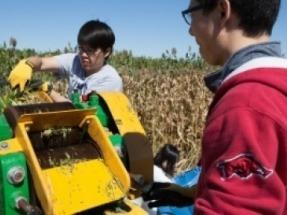 La caña de azúcar transgénica es mejor para producir biodiésel, afirma un estudio