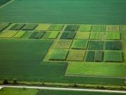 Nueva oportunidad para la hierba miscanto como biocarburante