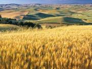 Batalla abierta a favor y en contra de los biocarburantes ante la decisión del PE