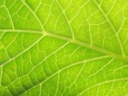 Avanza la manipulación genética para conseguir nuevos biocarburantes