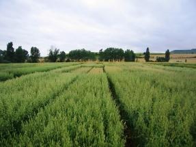 La incertidumbre es la norma en los estudios sobre el cambio indirecto del uso del suelo de los biocarburantes