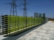 En marcha biorreactores variados para producir microalgas con CO2Algaefix
