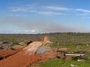 El aceite de palma acosa bosques, especies amenazadas y comunidades indígenas