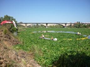 Jacinto de agua: de planta invasora a materia prima para etanol