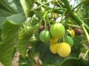 Propuesta científica para usar tierras marginales para biocombustibles