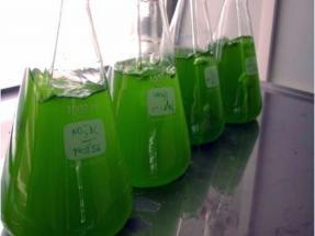 España, Chile y Perú van de la mano para producir y depurar biogás con innovación