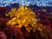 Las algas, otro campo donde los productores no se corresponden con los dueños de patentes