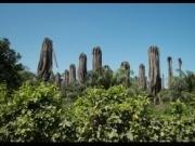 La bioenergía se lleva el 60% del aceite de palma consumido en Europa
