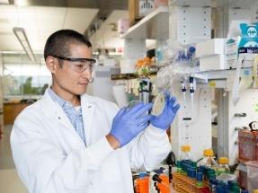 """Una """"super levadura"""" para duplicar la eficiencia en la producción de biocarburantes"""