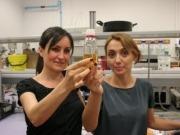 Mayor eficiencia en la producción de biodiésel con ultrasonidos e insectos