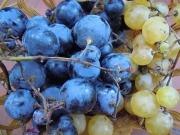 Hollejos, tallos de racimos y pepitas de uva para producir bioetanol