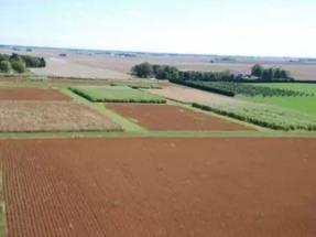 University of Illinois energy farm to get biomass boiler