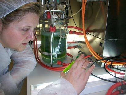 El rizo de una planta de biogás: cultivar microalgas que le sirvan de materia prima