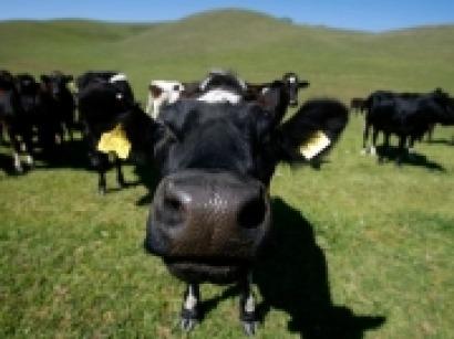 El biogás como instrumento eficaz para el desarrollo rural