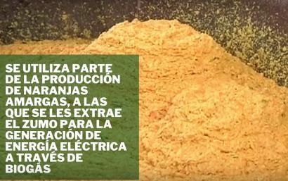 Las naranjas amargas facilitan el autoconsumo con biogás de las depuradoras de Sevilla