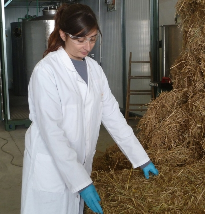 La paja de arroz, cada vez más cerca de convertirse en biogás comercial