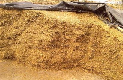 El biometano obtenido a partir de residuos de maíz puede ser peor para el clima que los combustibles fósiles