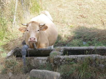 La industria europea de etanol lamenta que la CE olvide su co-producción de proteína animal