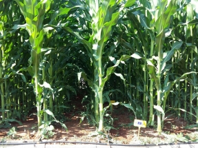 Los subproductos del biogás podrían cubrir con fertilizantes orgánicos todo el consumo de la agricultura