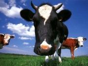 Las plantas de biogás llegarán antes que los parques eólicos