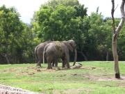 Alemania, también líder en biogás con excrementos de elefantes