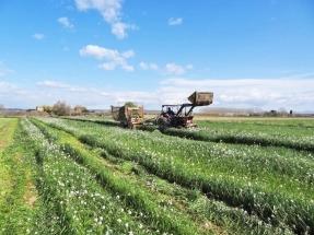 Cultivos captadores de nitratos que luego se convierten en biogás