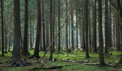 Los grupos operativos en innovación rural abren de nuevo la puerta a la bioenergía